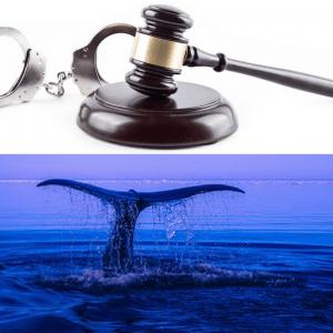 aspectos-penais-do-desafio-da-baleia-azul